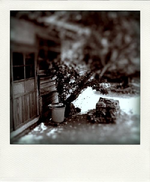 ts-garden-02